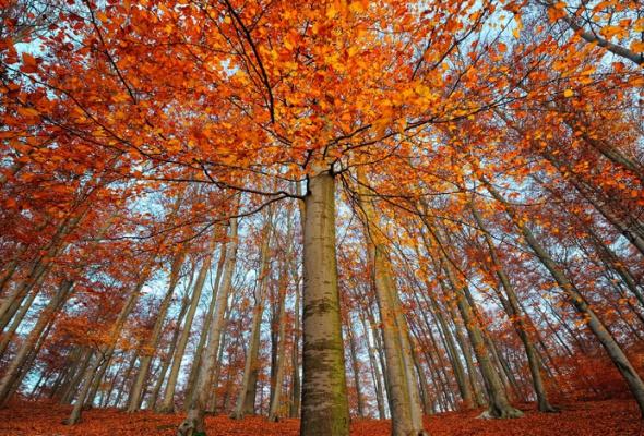 НаПатриарших прудах открылась выставка фотографий «Лесные истории. Осень» - Фото №15