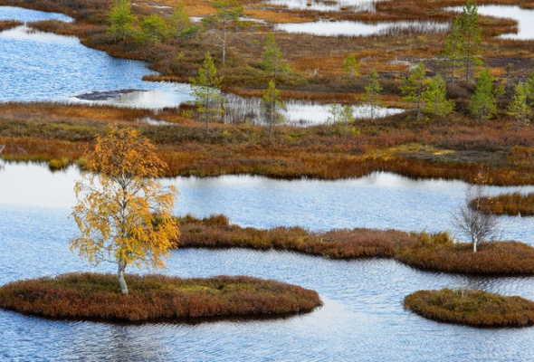 НаПатриарших прудах открылась выставка фотографий «Лесные истории. Осень» - Фото №17