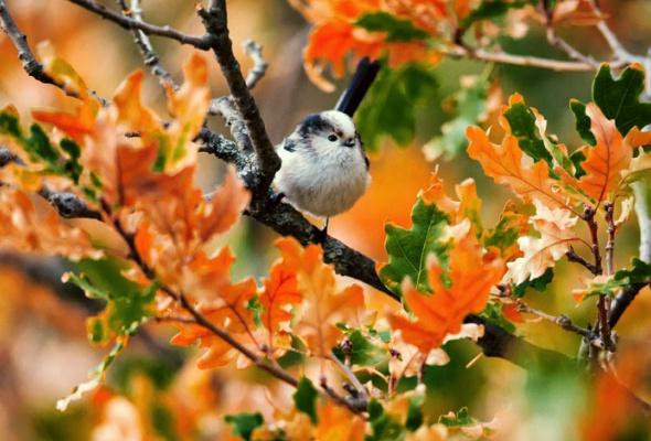 НаПатриарших прудах открылась выставка фотографий «Лесные истории. Осень» - Фото №18