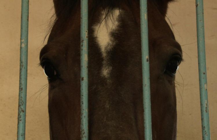 Две стороны одной лошади, В ауте