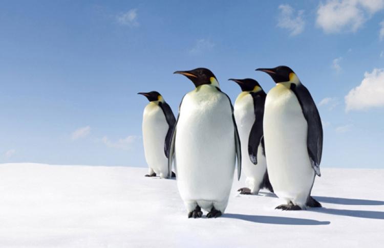 День Пингвинов