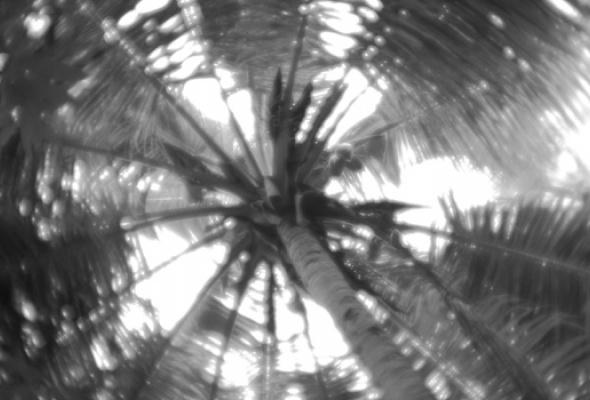 Ренессанс монокля - Фото №4
