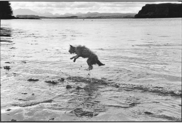 Эллиотт Эрвитт «Великое шотландское приключение» - Фото №3
