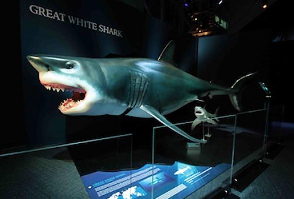 Мир акул. Глубокое погружение - Фото №0