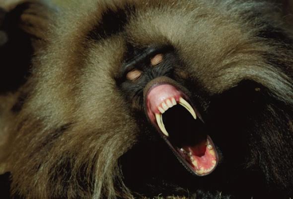125 лет National Geographic - Фото №3