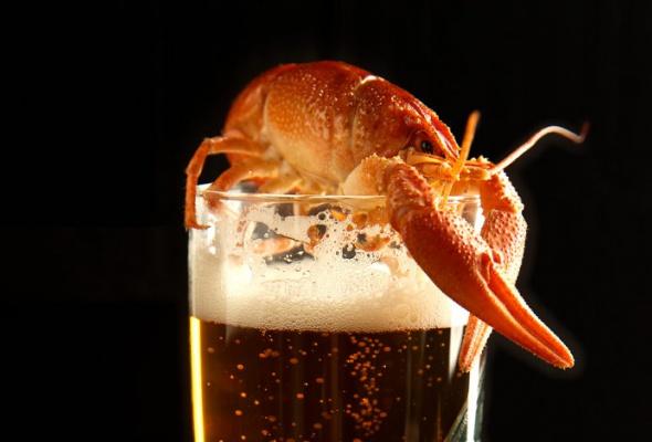 Пиво-раки - Фото №0