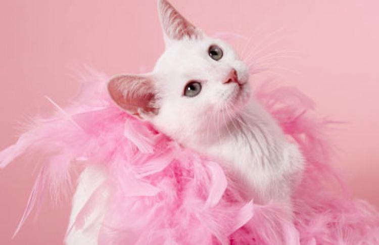 Театральный кот