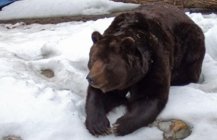 Каникулы в Московском зоопарке