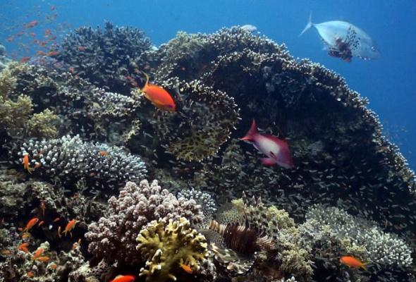 Коралловый риф — от планктона до акул - Фото №2