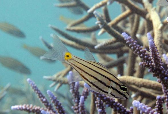Коралловый риф — от планктона до акул - Фото №3