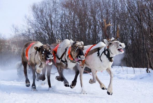 20вещей, которые весело делать зимой вМоскве - Фото №0