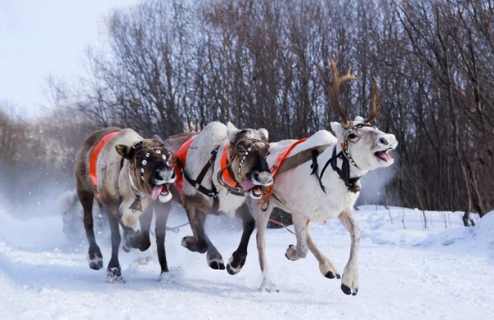 20вещей которые весело делать зимой вМоскве