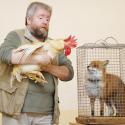 Про прирученных животных