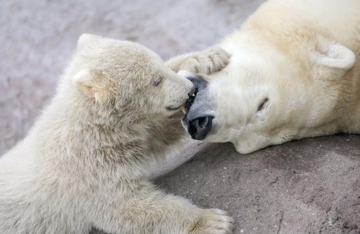 Московский зоопарк отмечает 150-летие