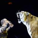 «У нас нет задачи показать плюшевых тигров»