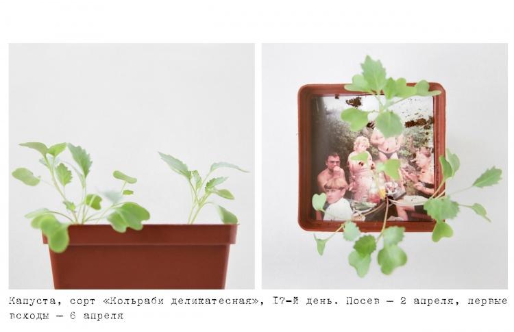 Анастасия Богомолова «Дача/Сад»