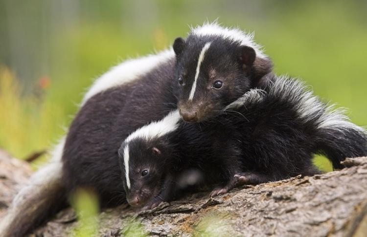 12 самых симпатичных обитателей зоопарка  Фото №431119