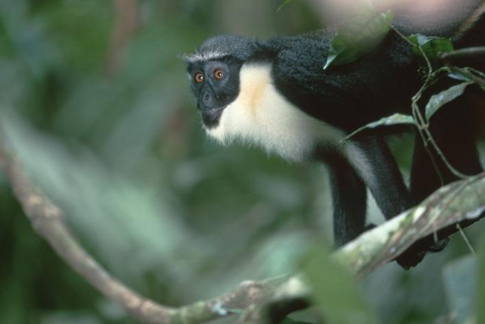 12 самых симпатичных обитателей зоопарка