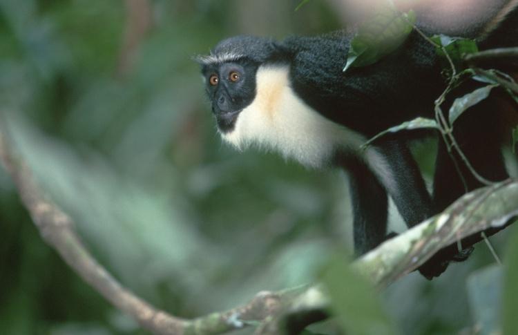 12 самых симпатичных обитателей зоопарка  Фото №431120