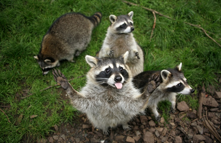 12 самых симпатичных обитателей зоопарка  Фото №431123