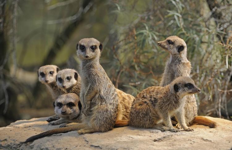 12 самых симпатичных обитателей зоопарка  Фото №431128