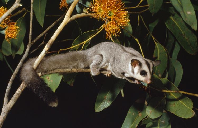 12 самых симпатичных обитателей зоопарка  Фото №431130