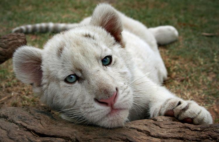 12 самых симпатичных обитателей зоопарка  Фото №431132