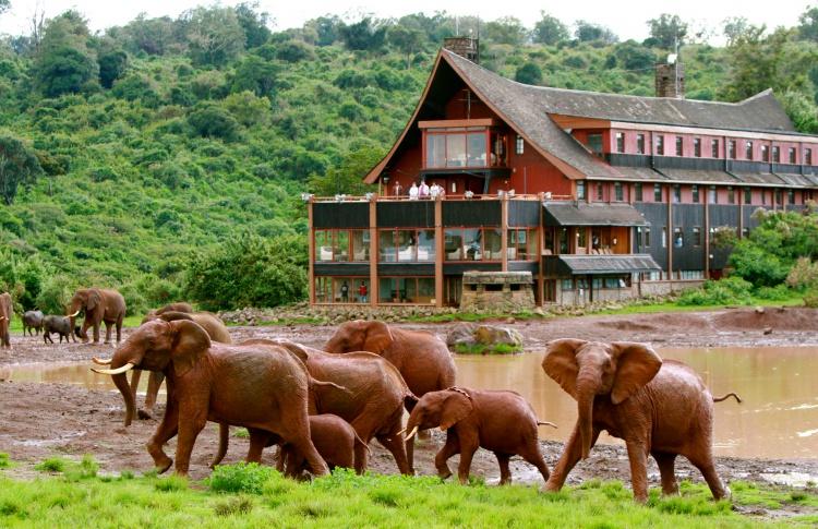 Почувствуй себя Ноем — выиграй сафари в Кении! Фото №431137