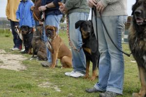 Полезные сервисы для жизни в Москве: собака