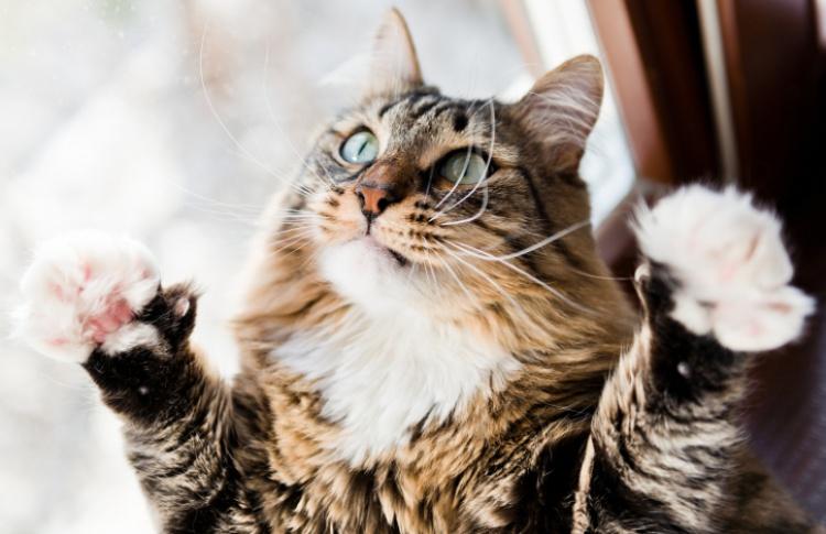 Идеальный уикенд: кошки в Сокольниках, фонтаны на ВВЦ, Джармуш в кино и Козловский в Малом театре