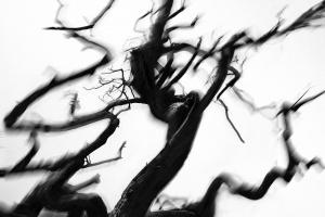 Чарльз Марч «Интерпретация природы»