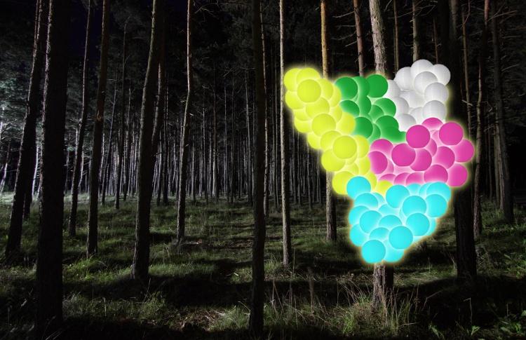 Цифровой лес / Digital Forest
