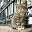 День эрмитажного кота в