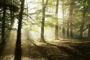 Экологический перформанс «Лес»