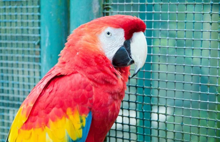 4 зоопарка в Москве и Подмосковье Фото №439011