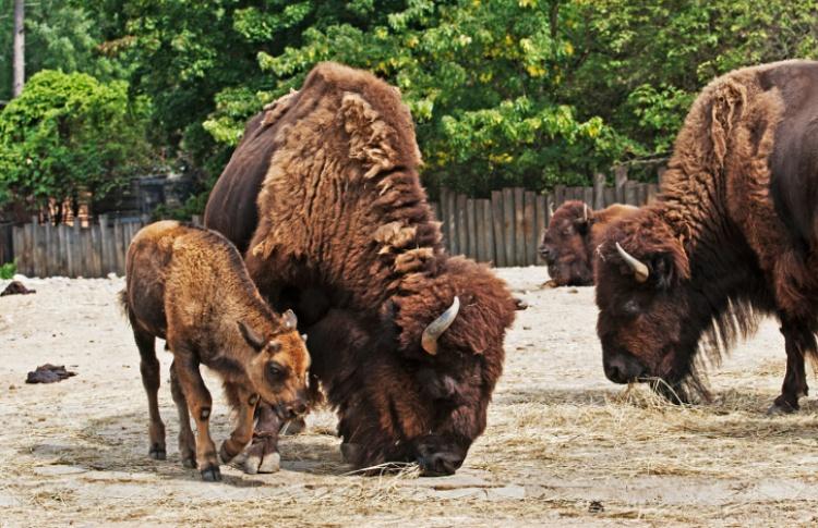 4 зоопарка в Москве и Подмосковье Фото №439012