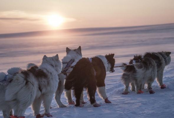 Арктика великая. Часть первая. Почитание духа огня - Фото №2