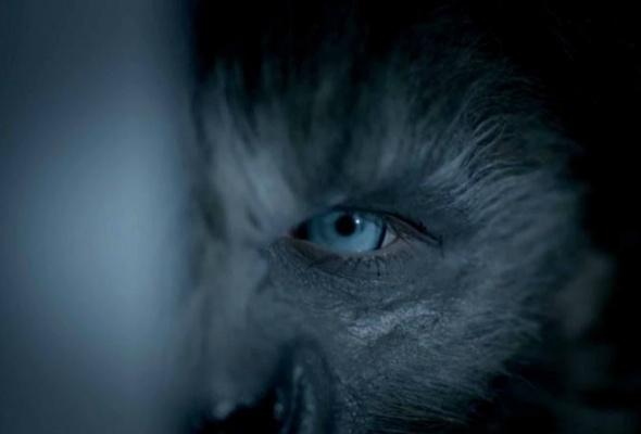 Волки - Фото №0