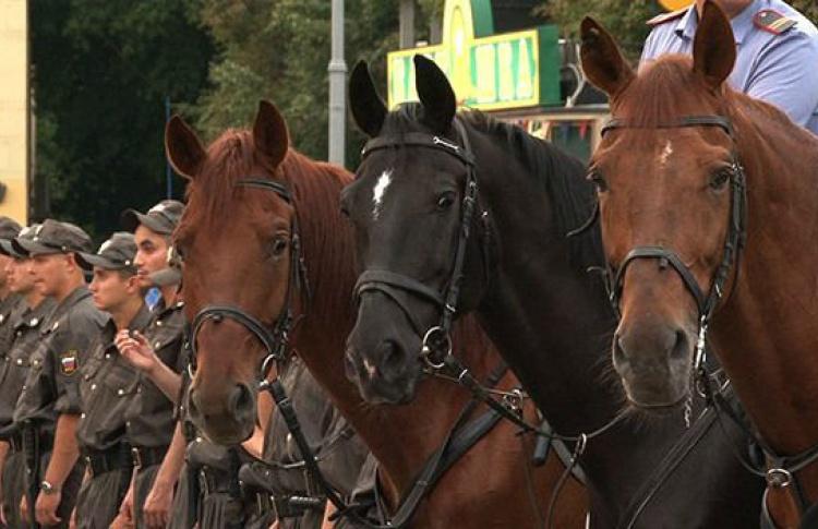Две стороны одной лошади