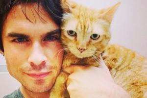 Звезды и кошки: 10 инстаграмов