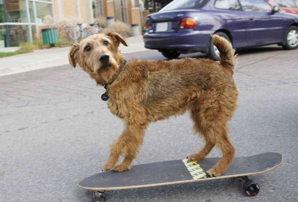 Пожарный пес - Фото №2