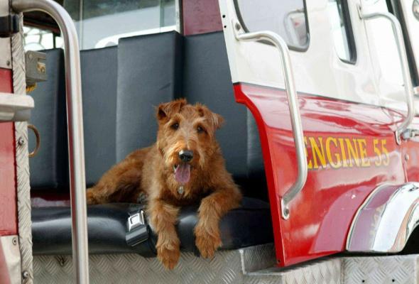 Пожарный пес - Фото №0