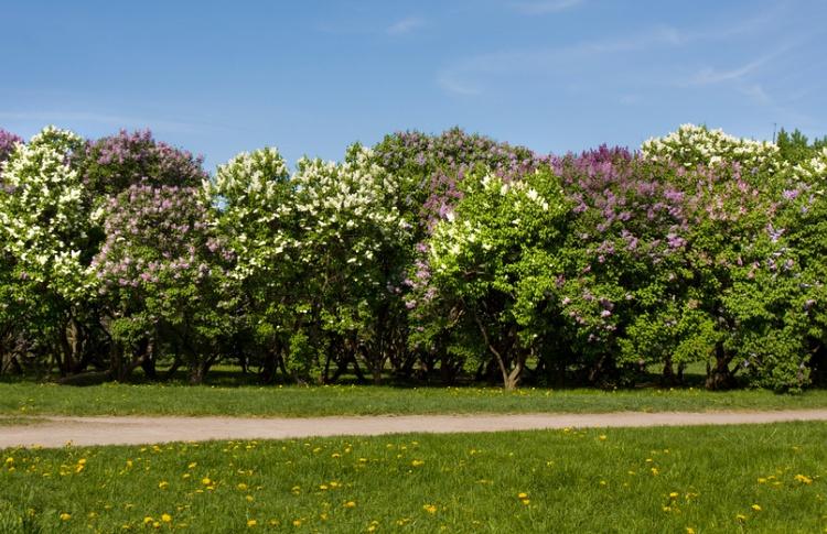 До конца года на окраинах реконструируют 50 парков