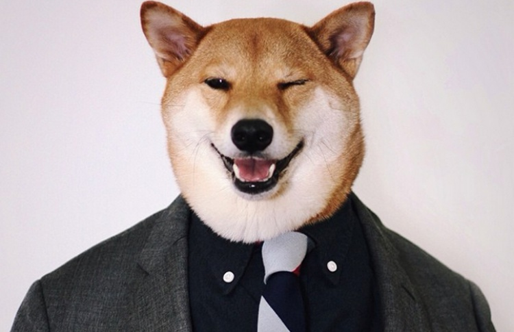 Модная собака Бодхи
