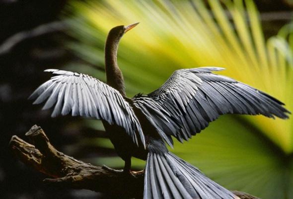Амазония: Инструкция по выживанию - Фото №7