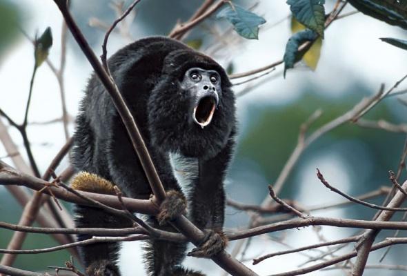 Амазония: Инструкция по выживанию - Фото №0