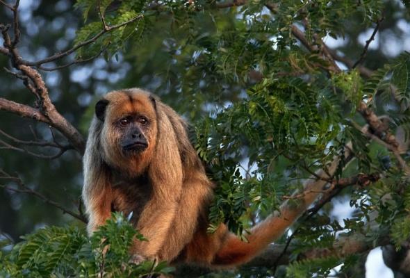 Амазония: Инструкция по выживанию - Фото №5