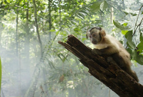 Амазония: Инструкция по выживанию - Фото №4