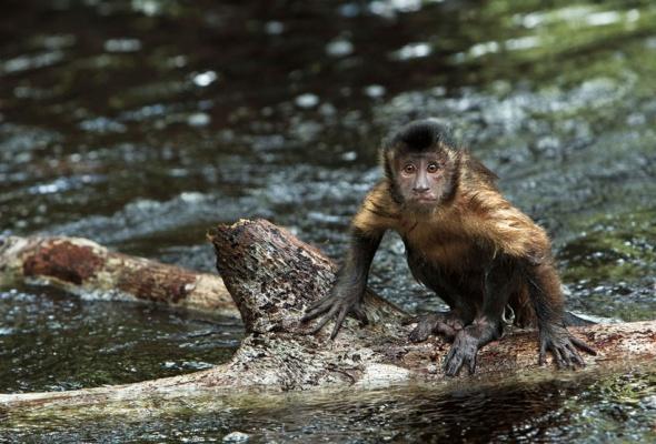 Амазония: Инструкция по выживанию - Фото №2