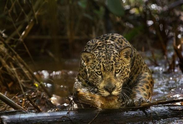 Амазония: Инструкция по выживанию - Фото №1